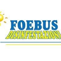 Foebus Disinfestazioni-Napoli