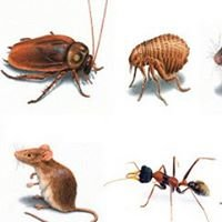 Frontier Pest Control