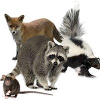 Vanish Pest Control & Wildlife Services