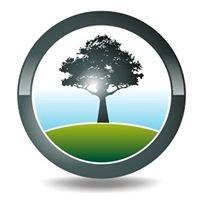 Black Tree Developments Ltd.