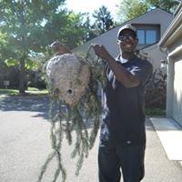 AntEco Pest Control - East, Inc.