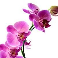 Orquídeas & Bromélias