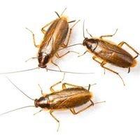 DTS Pest Control