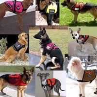 Service Animal Disability Rights Advocacy of Northern Nevada