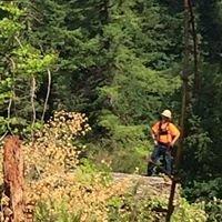 A-1 Logging