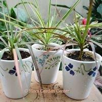 Flora Cacti & Succulents