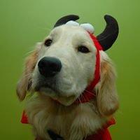 Dog Devil Studio