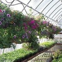 Bloomers Country Nursery