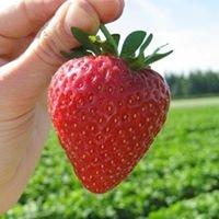 Mischler Berry Farm