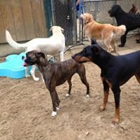 Stillwater Kennels and Training inc.