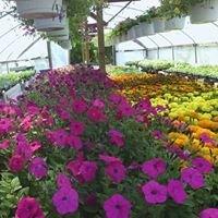 McKenzie's Flowers & Greenhouse