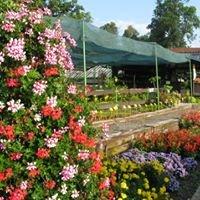 Zámecká zahrada Čimelice