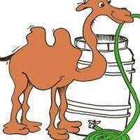 Camels Hump Rain Barrels