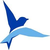 BlueBird, CPAs