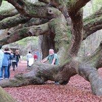 Jacobs Tree Surgery