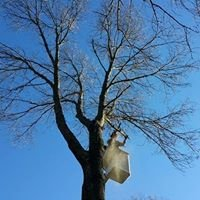 On A Limb Tree Service