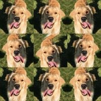 Bradley Phifer Dog Training