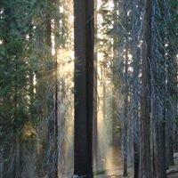 Frontenac Forestry
