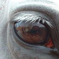 Yggdrasil Equestrian Training