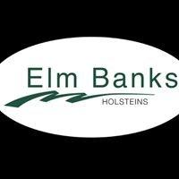 Elm Banks Holsteins