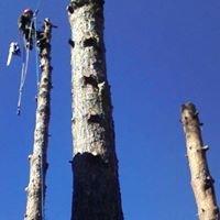 Sunset Mountain Tree Service