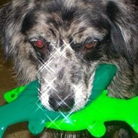 Rosie B's Swim Center/ Indoor swimming for Dogs