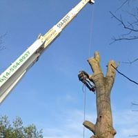 Scotts Tree Service Columbus Ohio