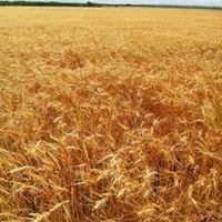 Mahoney Harvesting & Trucking