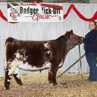 Bright Lights Show Cattle