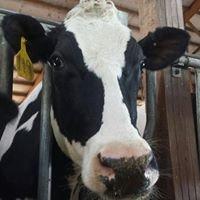 Kaufmann Dairy Farms