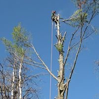 Catamount Tree Service