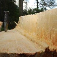 Bürki Forstunternehmung