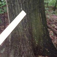 Dugan Creek Logging, Lumber and Mats