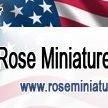 Rose Miniature Horses