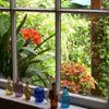 Perennial Pleasures Nursery