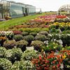 LI Greenhouse & Floriculture