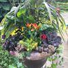 Enchanted Gardener