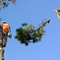 American Tree Service