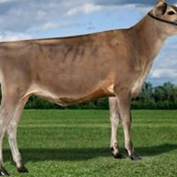 Sandy Knoll Dairy