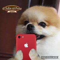 el salon del perro