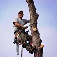 Hampton's Tree Service