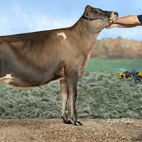Premier-View Holsteins and Jerseys