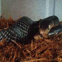 Feeder Frenzy Reptiles