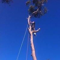 Coast to Coast Tree Services