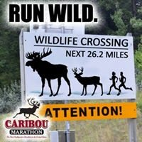 RUN Caribou
