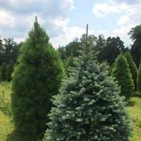 Pine Grove Nursery