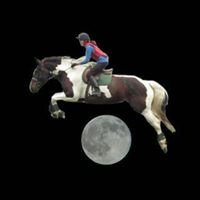 Showtime Sport Horses