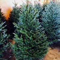 K & K Christmas Tree Farms