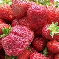 R&M Strawberry Farm