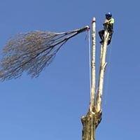 Rainfords Tree Care